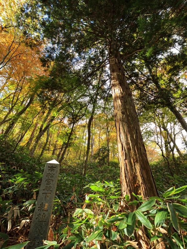 「高松宮殿下親植之桧」の石碑と桧