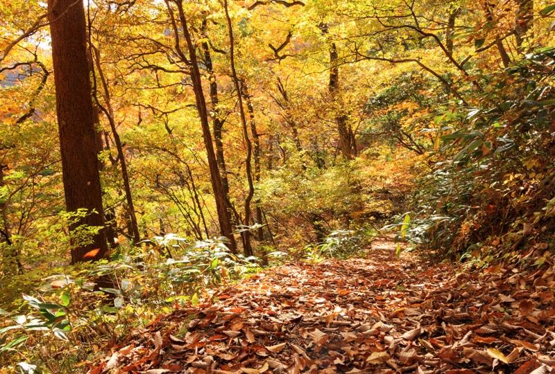三ツ滝(三段峡)へと向かう遊歩道