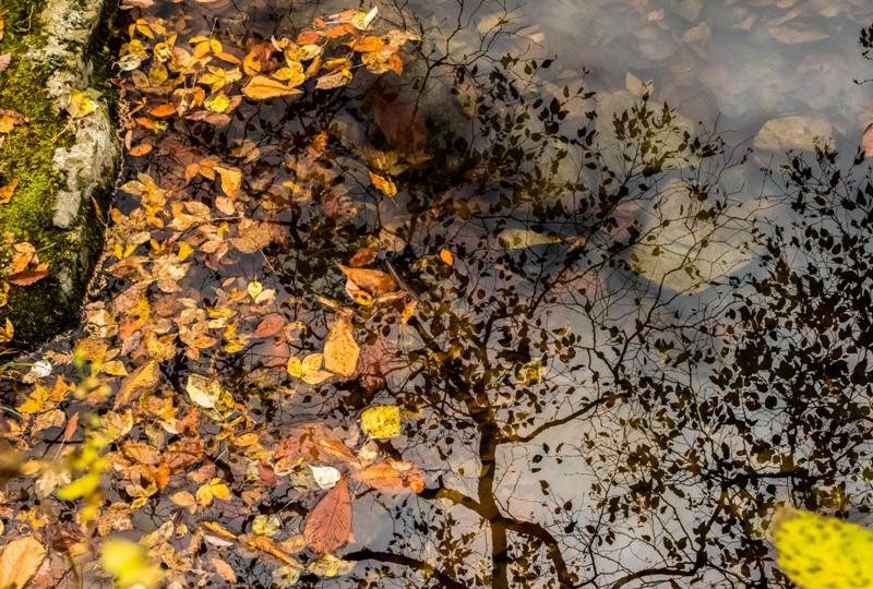 三ツ滝周辺の水たまり