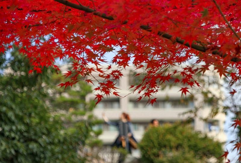 縮景園の紅葉