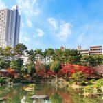 『縮景園』青空、緑の木々、真っ赤な紅葉で色彩豊かじゃの~!!