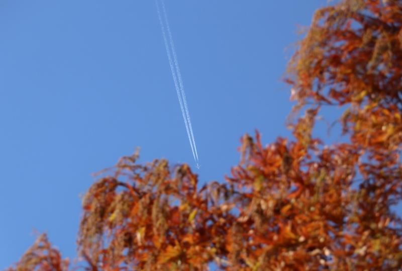 『東千田公園』広大跡地のメタセコイアの紅葉と飛行機