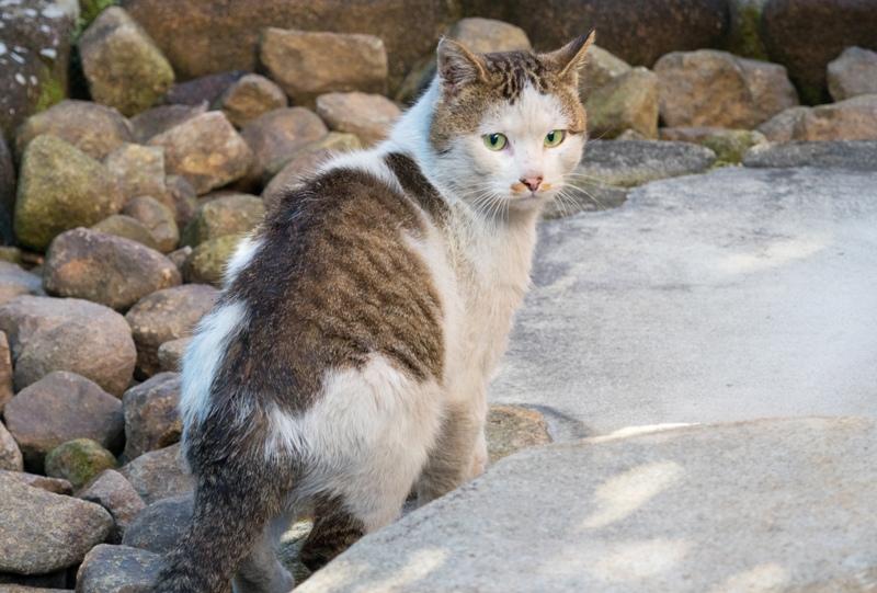 白島稲荷パーク内の猫