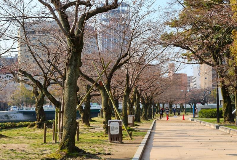 広島平和公園の桜開花情報2019