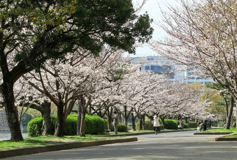 広島城のお堀の桜並木
