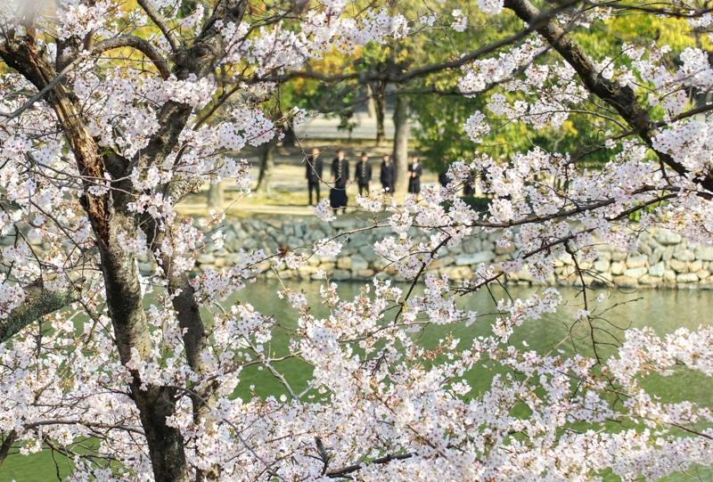 広島城と桜と高校生