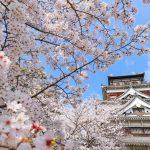 『広島城』桜をまとう天守閣、お堀と石垣の桜も美しい!!
