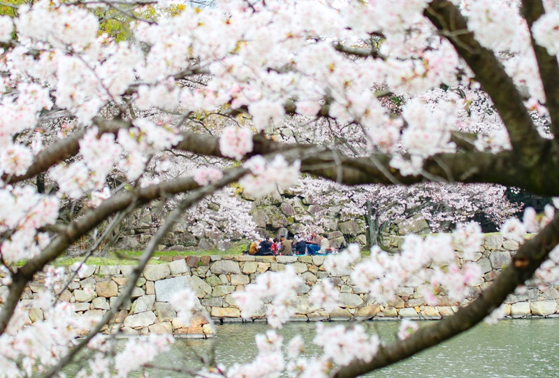 広島城では花見客が宴の真っ最中