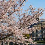 【広島平和記念公園】桜開花情報2020、随時更新じゃ~!