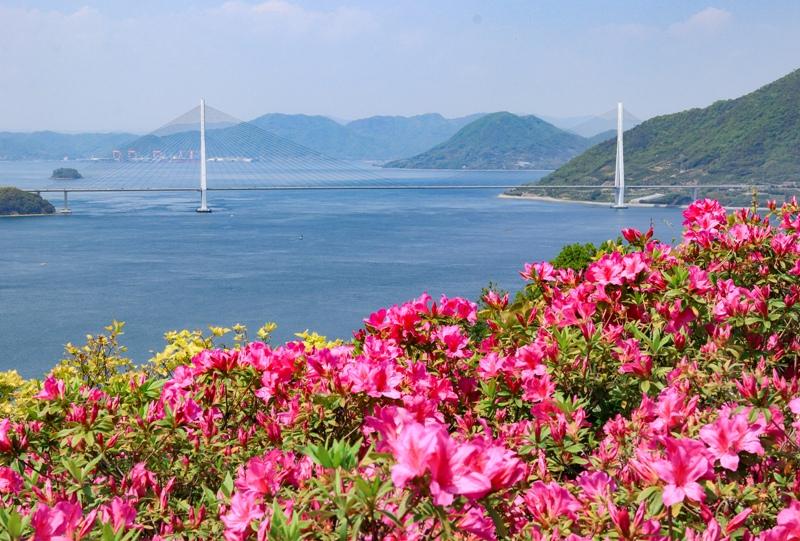 しまなみ海道、伯方島『開山公園』ツツジと多々羅大橋