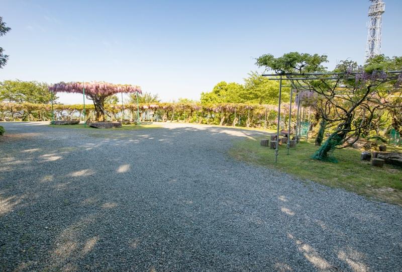 神ノ倉山公園、藤棚