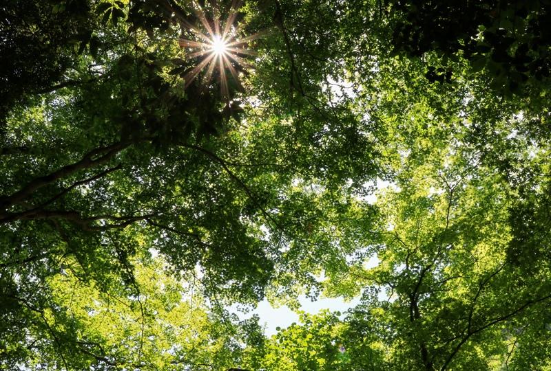 三段峡、新緑から木漏れ日
