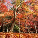 『ほとけばら遊園』観音様が見守る紅葉の空間(北広島町大朝)