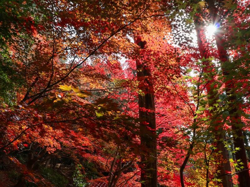 『ほとけばら遊園』の紅葉(広島県山県郡北広島町大朝)