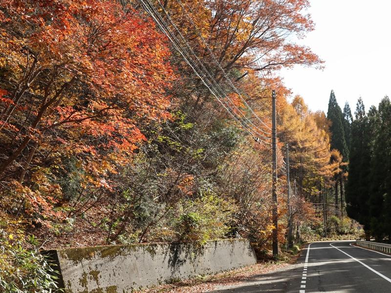 吉和展望台へ向かう道中の紅葉