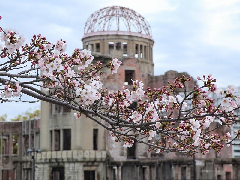 広島平和公園の桜開花情報2020