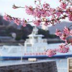 尾道水道で一足早く春を感じる河津桜!(尾道市土堂)