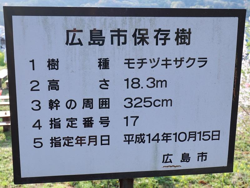 『湯戸モチヅキ桜』広島市保存樹の案内版