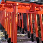 『大島神社』67基の連立鳥居がお目見え、三原市の新名所!