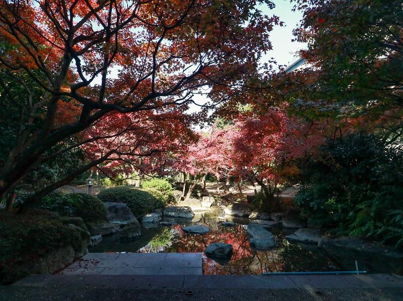 「西部埋立第五公園」日本庭園の紅葉(商工センター)
