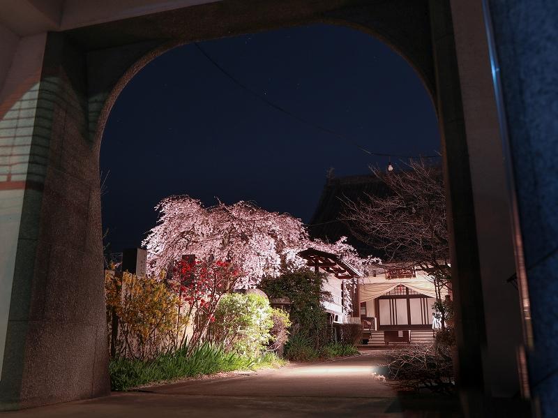 通安寺、しだれ桜ライトアップ