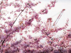 河津桜とクレーン(広島県呉市安浦町)