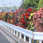 バラの生垣に囲まれた広島工業大学高等学校(広島市西区)