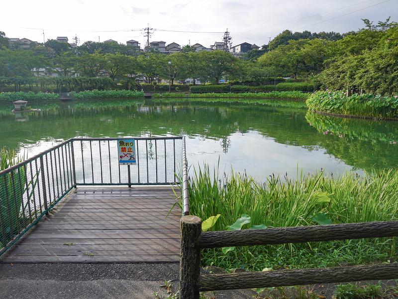 府中公園の池
