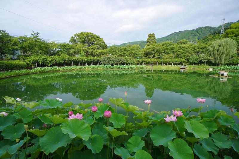 府中公園の池の全体の様子